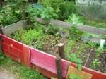 Unser Gemüsebeet mit Möhren, Kräutern, Kohlrabi, Radieschen...