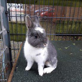 Kaninchen versorgen